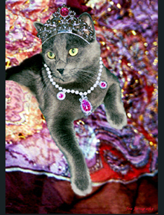 Jeweled Cat Pet Photo Portrait by FineFurtography.com 772-349-0044